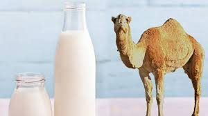 تاثیر شیر شتر بر اتیسم